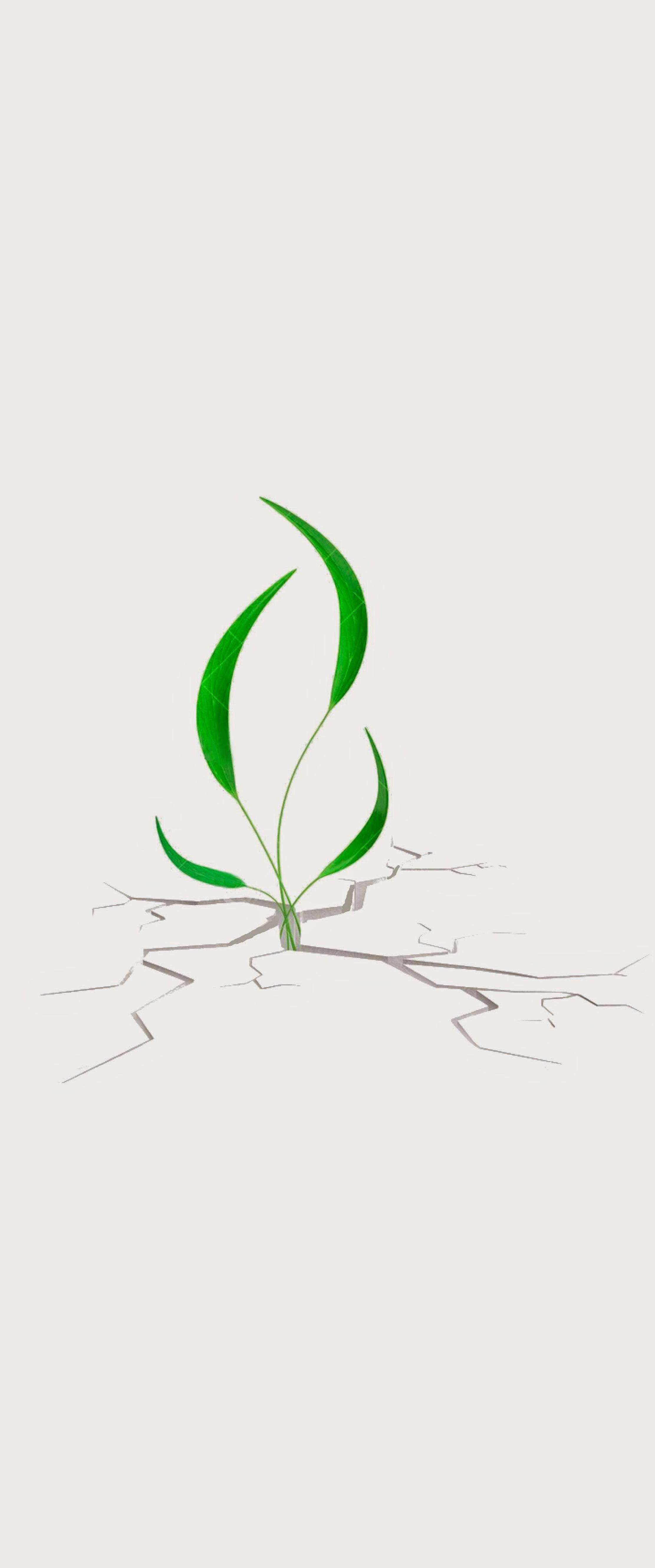 plantazen