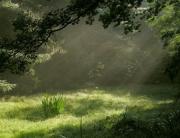 bosque sosegado
