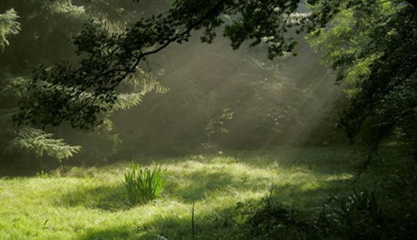 El umbral del bosque