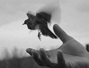 oiseau_